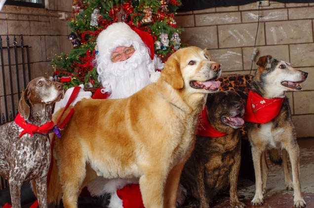 Santa Photo Dec 2013