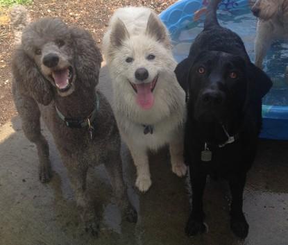 Aengus, Sierra & Harley