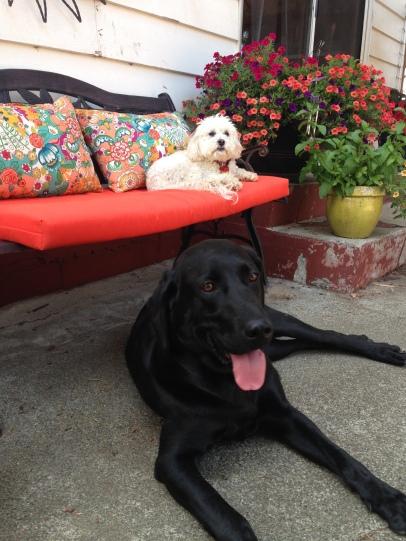 Django & Shree