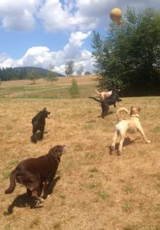 Sasha, Lilly, Bud Sr, Harley & Zoie