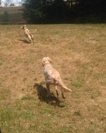 Zoie chasing Bud Sr