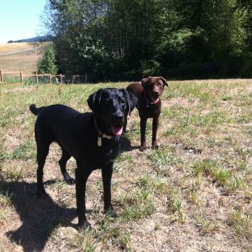 Harley & Otis