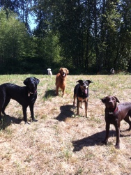 Harley, Duke, Apollo, Emmy & Otis