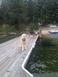 Dock Patrol
