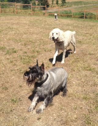 Beau & Lilo