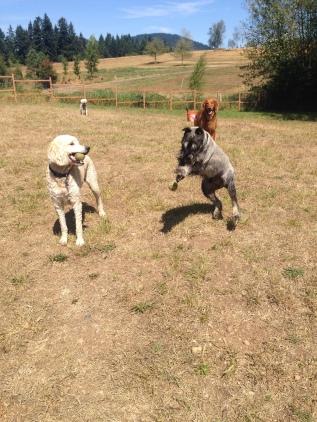 Lilo, Beau & Duke