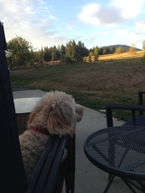 Zoie taking in the sunset