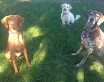 Aria, Pappy & Petey