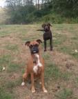 Ellie & Otis