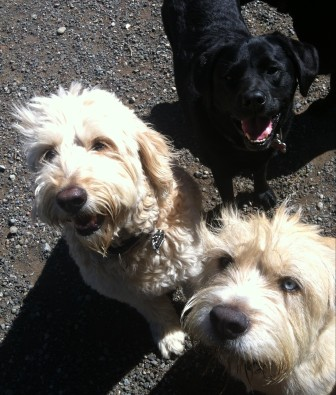 Maui, Buddy & Lilly
