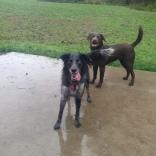 Cinder & Otis