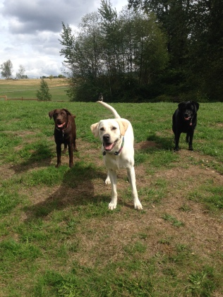 Otis, Bud Jr & Lilly