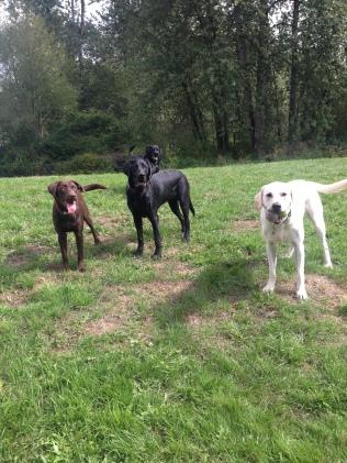 Otis, Harley, Lilly & Bud Jr
