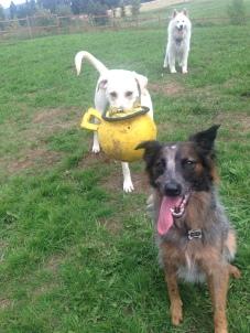 Mila, Bud Jr & Sierra