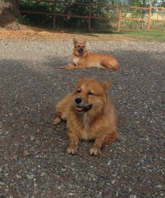 Flossie & Molly
