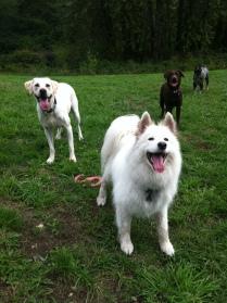 Sierra, Bud Jr, Otis & Beau