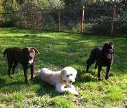 Otis, Maui & Benny