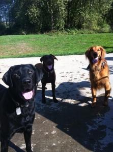 Harley, Otis & Duke