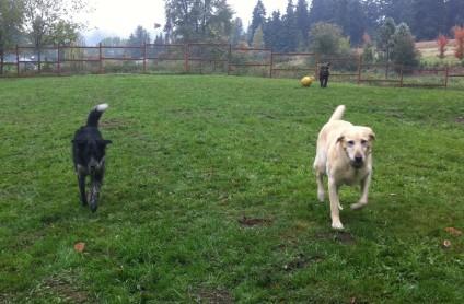 Cinder & Benny Sr