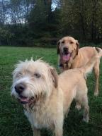 Buddy & Riley
