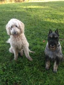 Sammy & Beau