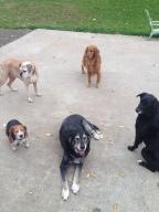 Sam, Homer, Winston, Duke & Abby