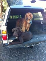 Otis & Duke
