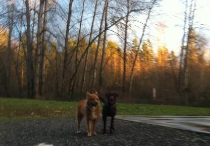 Flossie & Otis