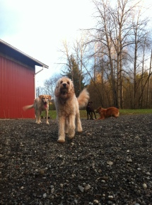 Ms Zoie, Benny, Otis & Flossie