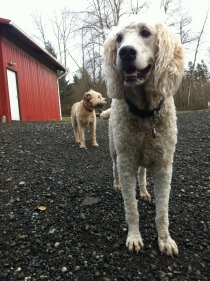 Lilo & Buddy Sr