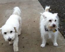 Teddy & Daisy