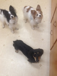 Little Ones Pepper, Lex & Fusee