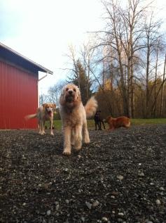 Zoie, Benny, Otis & Flossie