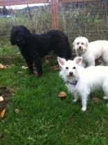 Benny, Daisy & Abby