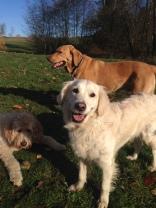 Zoie, Liza and Riley