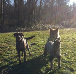 Otis, Beau & Flossie