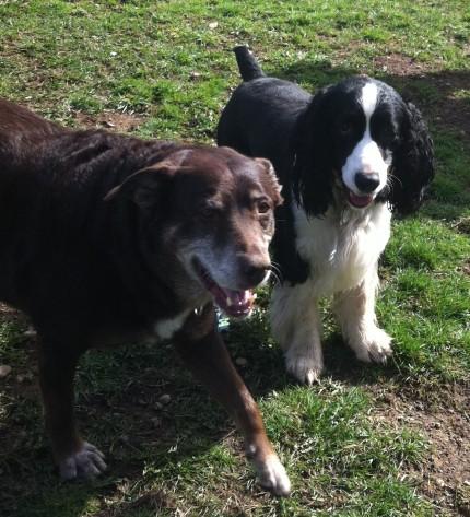 Sasha & Ike
