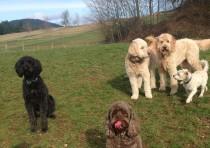 Luka, Brady, Maui, Zoie & Pappy