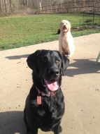 Harley & Zoie