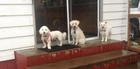Teddy, Apollo & Daisy