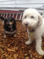 Pepper & Teddy