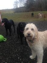 Maui, Lilly & Harley