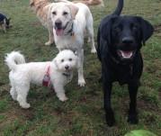 Teddy, Harley & Bud Jr