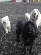 Benny, Abby, Teddy & Lilo