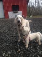 Teddy & Lilo