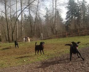 Oscar, Lilly, Harley, Blue & Bud Sr
