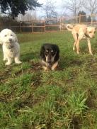 Mini Pack Teddy, Pepper & Missy