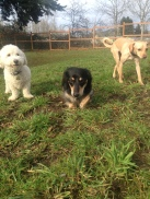 Mini Pack Teddy, Pepper & Missy