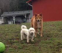 Teddy & Flossie