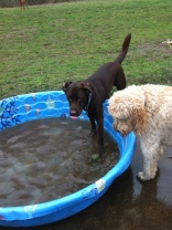Otis & Zoie